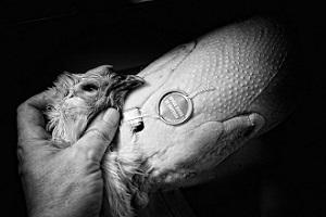 Foie gras, saumon et chapon