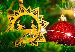 L'inimaginable croissance du sapin de Noël
